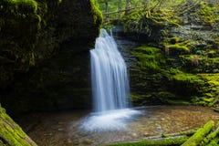 Agua a través del pino Imagen de archivo