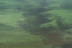 Agua verde floreciente en la charca imagen de archivo