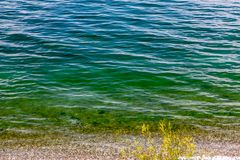 Agua verdoso-azul ondulada pura de Baikal con una planta amarilla en la orilla foto de archivo