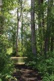 Agua vergonzosa a través de árboles altos Imagen de archivo libre de regalías