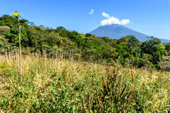 Agua volcano & countryside. Rough grassland with saplings growing & woodland with Agua volcano in background in Escuintla, Guatemala, Central America royalty free stock images