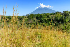 Agua volcano, woodland & grassland. Rough grassland with woodland & Agua volcano in background in Escuintla, Guatemala, Central America stock photography