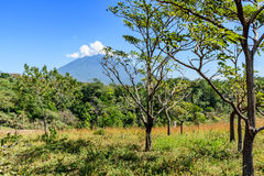 Agua volcano & woodland. Rough grassland with saplings growing & woodland with Agua volcano in background in Escuintla, Guatemala, Central America stock image