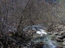 Agua y árboles Imágenes de archivo libres de regalías