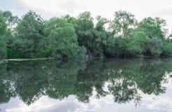 Agua y árboles Foto de archivo