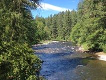 Agua y árboles Fotos de archivo
