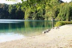 Agua y árboles verdes en el lago fotografía de archivo