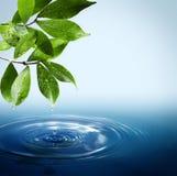 Agua y hojas Imagen de archivo libre de regalías