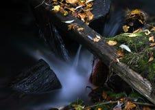 Agua y hojas 7. foto de archivo