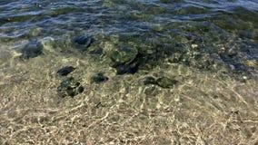 Agua y ondas claras almacen de metraje de vídeo