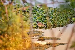 Agua y pájaro fotografía de archivo