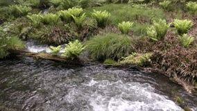 Agua y plantas de manatial almacen de metraje de vídeo