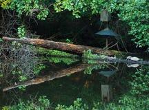 Agua y tortugas reflectoras Fotografía de archivo