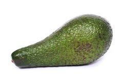 Aguacate (gratissima del Persea) Imagen de archivo libre de regalías