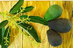Aguacates verdes frescos con las hojas en la madera verde oliva Imagen de archivo libre de regalías