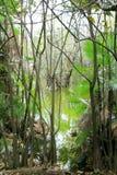 Aguada cenote in mexico Mayan Riviera jungle stock images