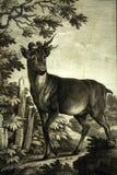 Aguafuerte principal del paisaje del detailin de los ciervos de las antigüedades que graba al agua fuerte fotos de archivo libres de regalías