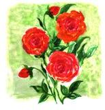 A aguarela floresce a pintura da impressão Imagem de Stock Royalty Free