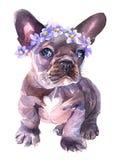 Aguarela pintado à mão O buldogue francês com flores envolve-se no seu ouvido ilustração do vetor