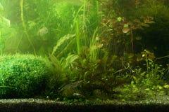 aguarium krajobrazu Fotografia Stock