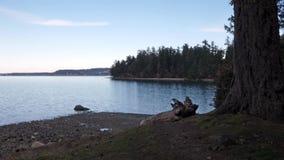 Aguas azules del sonido de puget con el bosque y de la playa cerca del bosque almacen de video