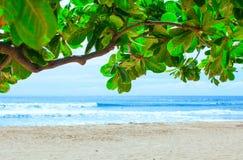 Aguas azules hermosas de Hawaii vistas a través de rama frondosa verde Fotos de archivo