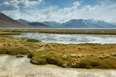 Aguas calientes salt lake in Atacama region Royalty Free Stock Photos