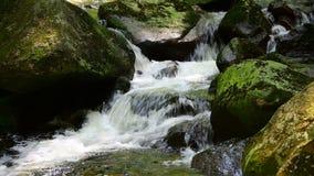 Aguas de conexión en cascada hermosas sobre rocas cubiertas de musgo verdes en el bosque almacen de metraje de vídeo
