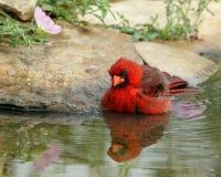 Aguas de la primavera Fotografía de archivo libre de regalías