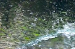 Aguas de lavado del coche en Front Glass fotografía de archivo libre de regalías