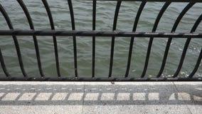Aguas de río metrajes