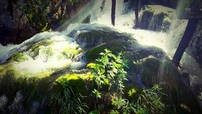 Aguas del bosque Fotos de archivo libres de regalías