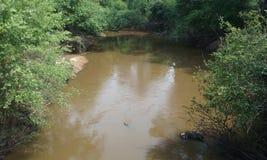 Aguas fangosas Imagen de archivo