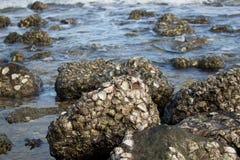 Aguas hermosas del mar fotos de archivo