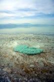 Aguas poco profundas del mar muerto Foto de archivo libre de regalías