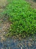 Aguas residuales y mala hierba o contaminación indeseada de la flora Fotografía de archivo libre de regalías