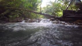 Aguas termales, corriente en la selva almacen de metraje de vídeo