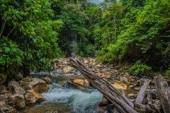 Aguas termales hermosas en la selva Fotografía de archivo libre de regalías