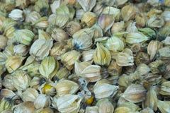 Aguaymanto 金黄的浆果 库存照片