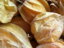 Aguaymanto, Peruvian fruit Stock Photos