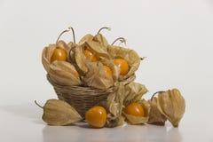 Aguaymanto - physalis peruviana - natura morta dorata della bacca Fotografie Stock Libere da Diritti
