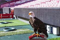 Aguia Vitria English: Victory Eagle the mascot of Portuguese club S.L. Benfica. Stock Photos