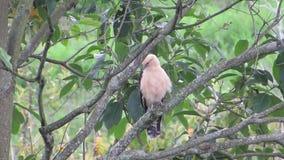 Aguila del viale della natura di fauna stock footage