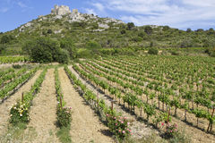 Aguilar castle and vineyard Stock Photo