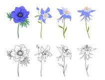 Aguileña, aquilegia, flores de la anémona libre illustration
