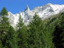 Aguille de Tsa επάνω από το δάσος πεύκων Arolla, Ελβετία Στοκ εικόνα με δικαίωμα ελεύθερης χρήσης