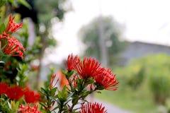 aguja de la flor Fotografía de archivo libre de regalías