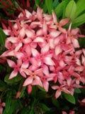 Aguja de las flores Fotos de archivo