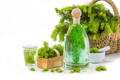 Aguja Spruce mala, plantas medicinales imagen de archivo libre de regalías