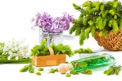 Aguja Spruce mala, plantas medicinales, plantas aromáticas Imagen de archivo